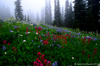 Fog in the meadow, Mt Rainier National Park